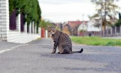 Ambiente: Riparte il progetto di sostentamento alle colonie feline con la distribuzione di croccantini per i gatti