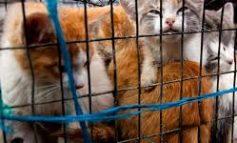 AIDAA: Legittima difesa armata contro chi ruba cani e gatti