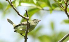Amazzonia, scoperte 381 nuove specie, una ogni 2 giorni