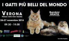 In arrivo a Verona i gatti più belli del mondo. Saranno in concorso alla Gran Guardia sabato 11 e domenica 12 novembre