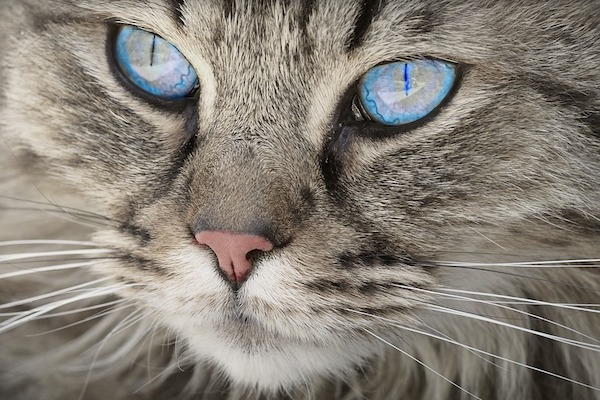 Tengono gatto chiuso in cantina a Milano – Negozio denunciato