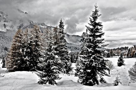 Maltempo:Veneto, chiusi passi per neve
