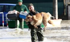 Animalisti, soccorso ad animali in Codice Protezione civile