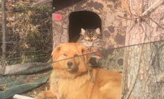 In Veneto ok sepoltura cani in giardino