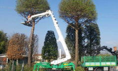 VERDE PUBBLICO: interventi settimanali di potature alberi