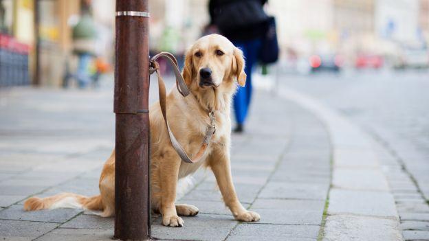 Nel mese di giungo abbandonati 18.000 cani (-22% rispetto allo scorso anno)