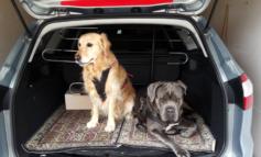 Estate. Poche regole per viaggiare sicuri con il cane in auto