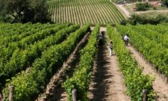 Agricoltura: Stati generali Venerdì 21 Giugno a Legnaro per mettere a fuoco priorità e strategie venete per il prossimo decennio