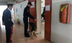 Un arresto daspo in Borgo Venezia