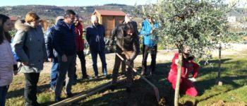 Negli orti per anziani di San Felice Extra 6 nuovi alberi