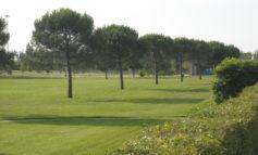Smog addio grazie a piante e aree verdi in città. Esperti a convegno sui benefici del verde urbano mercoledì 12 dicembre dalle 9 in Via S. Teresa 2 - Ordine Architetti