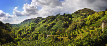 Unesco. Domani alle 11 in Regione punto stampa di Zaia su Colline Conegliano-Valdobbiadene