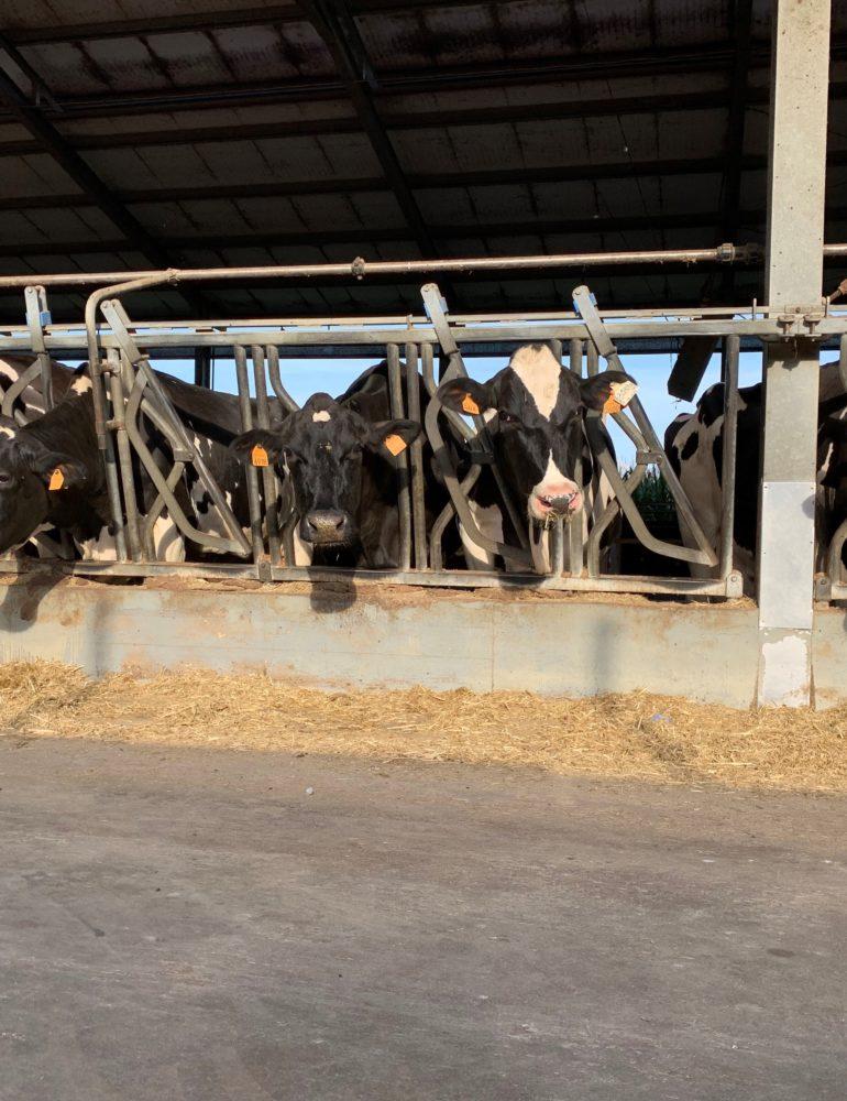 Fieragricola, Timore dazi spinge negli USA Import formaggi italiani: +80% ad Agosto