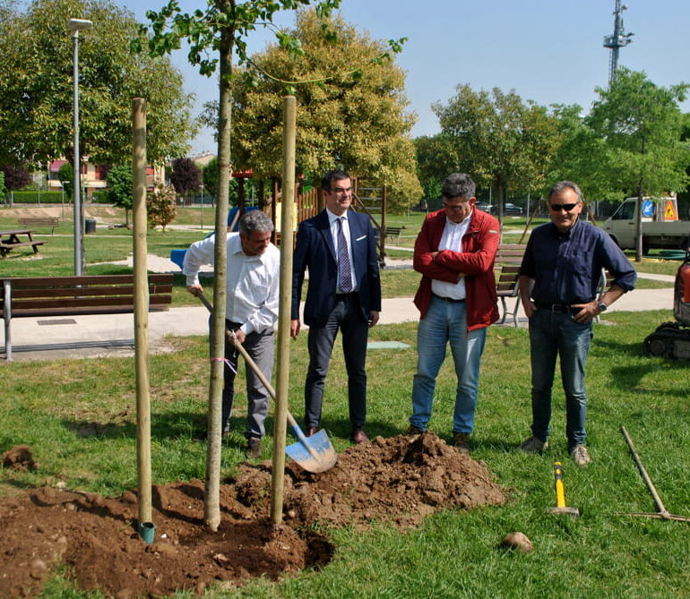"""Regione Veneto: 200 mila euro ai Comuni per nuovi alberi. Assessore Pan, """"Non lasciamo cadere la lezione di Vaia, la riforestazione contrasta i cambiamenti climatici"""""""