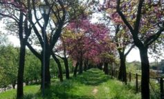"""""""Ridiamo il sorriso alla Pianura Padana"""". Da oggi i veronesi trovano online il modulo per richiedere piante gratis"""