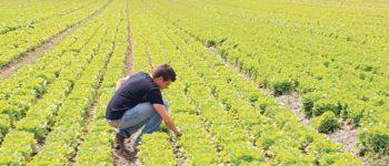 """Agricoltura. Assessore Pan, """"Disoccupati nei campi? Ipotesi allo studio in Veneto,in accordo con i centri per l'impiego, le organizzazioni agricole e le parti sociali"""""""
