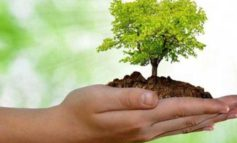 Giornata degli alberi: trekking gratuiti alla scoperta del patrimonio arboreo romano