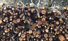 Consumo di legna nel settore domestico: in corso un'indagine telefonica