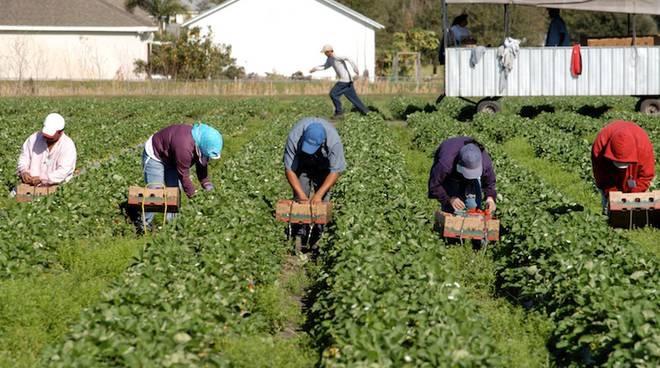 """Caporalato sui campi: Assessore veneto all'agricoltura, """"Schiavitù delinquenziale da prevenire con l'aiuto di tutta la filiera. In Regione Veneto le antenne sono alte"""""""