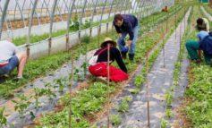 Agricoltura sociale in Veneto. La Regione istituisce il gruppo di lavoro per definire criteri e modalità nell'ambito della programmazione sociale e socio sanitaria