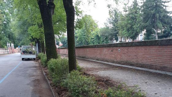 Vicenza. Viale Rumor, riqualificata l'aiuola lungo il fiume