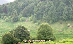 Coldiretti Verona. Lessinia: come valorizzare il settore lattiero caseario. Tavola rotonda giovedì 10 settembre alle 20.30 a Erbezzo