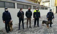 Axel è il nuovo cane antidroga della polizia locale. Raddoppia l'unità cinofila del comune
