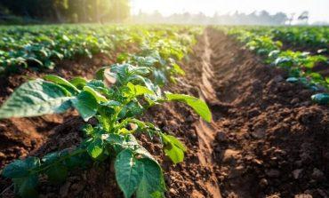 Il Consiglio dei Ministri stanzia oltre 392 milioni per lo sviluppo rurale del Veneto