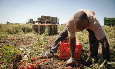 Al via la campagna vaccinale per gli operai agricoli stagionali extracomunitari nel veronese
