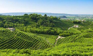 Agricoltura. La Regione Veneto stanzia 9milioni e 300mila euro per investimenti nelle aziende vitivinicole